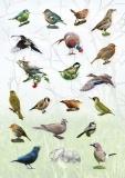 AP_bird_stickers-1