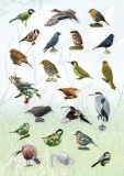 AP_bird_stickers-2