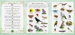 SAP_Garden_Wildlife
