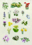 SAP_flower_stickers_1