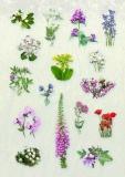 SAP_flower_stickers_2